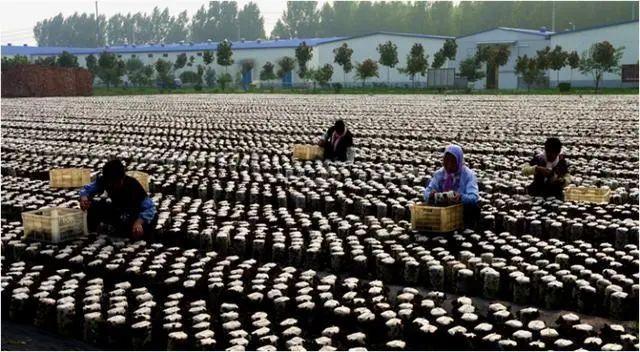 三农日报 政策:加强产业扶贫带头人培养;阿里报告:今年是数字农业风口