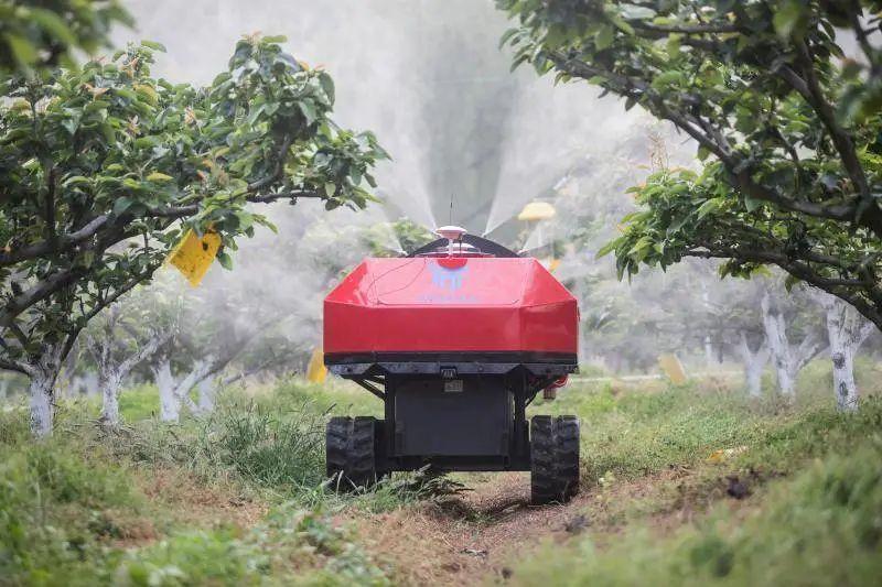 2020深耕数字农业!阿里、京东、拼多多开展军备竞赛