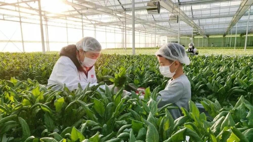未来已来!高科技农业成为战略利器