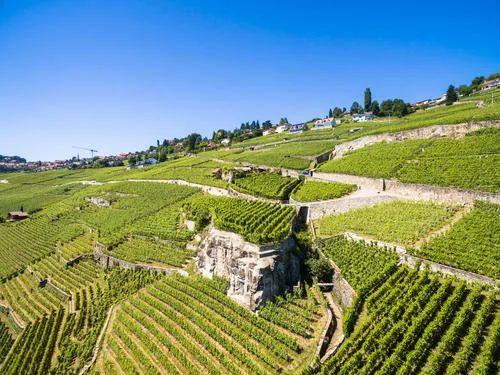 【海外农业】瑞士农业的发展特点和数字化趋势