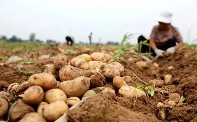 三农日报|我国加快数字应用基地建设;德国数字农业:农民不愿上传农场数据