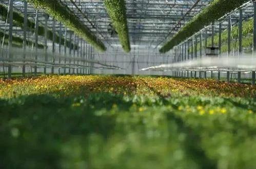 政策加持,中国农业科技正在等待巨变,大佬疯狂布局