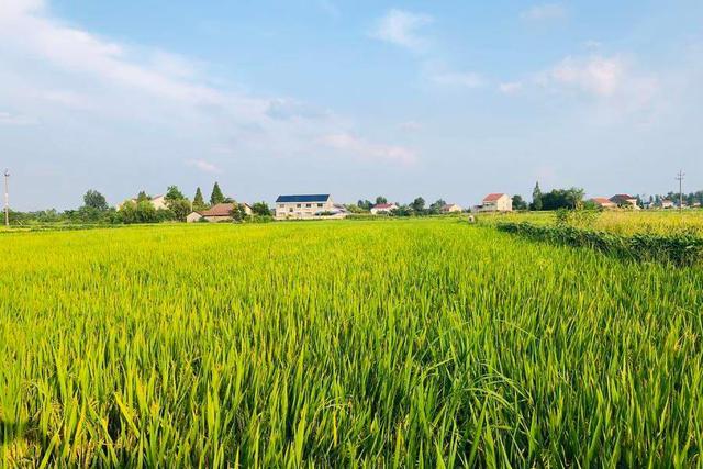 12亿元!农业科技最大一次融资!极飞科技打造农业无人化新革命