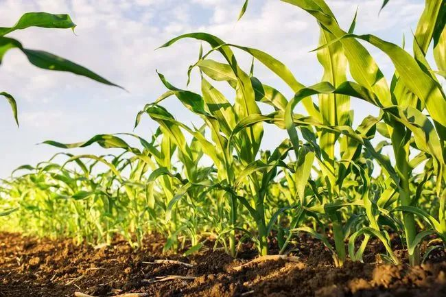 三农日报|世界种业正迎来现代生物育种科技革命;全球智能农业市场规模或达千亿级