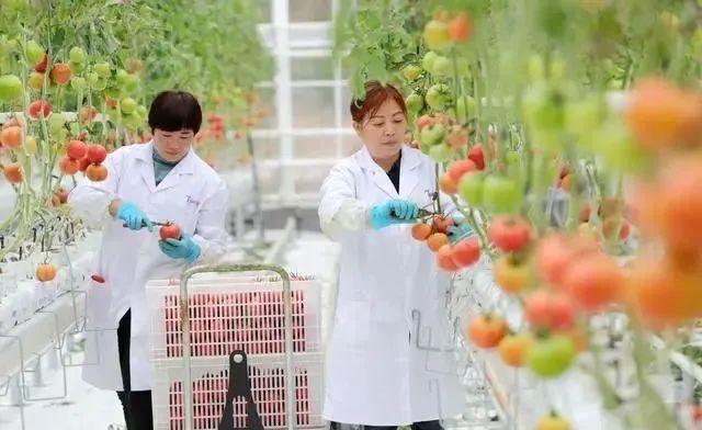三农日报|我国数字农业发展的三大难题;中国运动饮料市场规模或达198亿