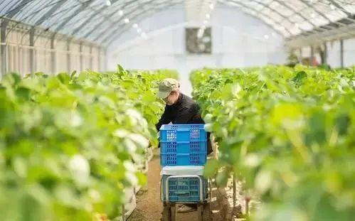 中国数字农业的发展概况
