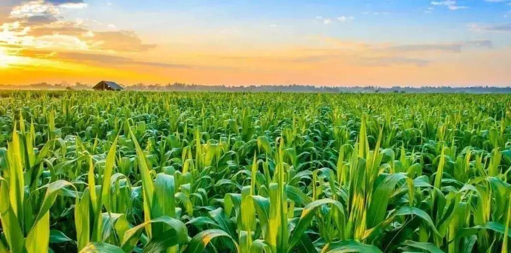 中国智慧农业迎来大爆发(附政策及国外案例)