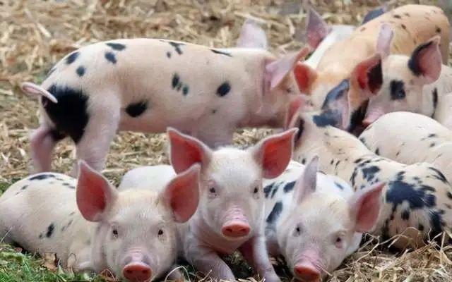 【农业科技】智慧农业正推进精细化智能化养殖种植