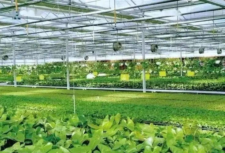 智慧农业:已成为行业趋势,但还需要解决这3大问题