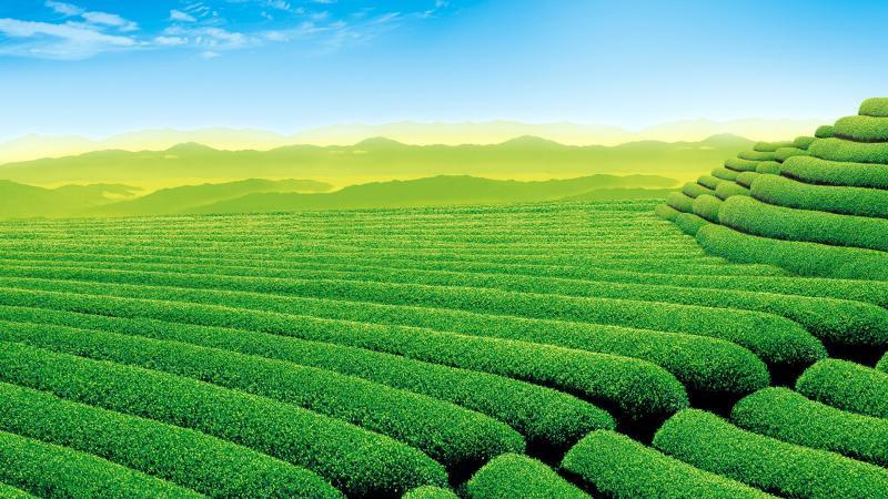 智慧农业该如何进一步的发展?