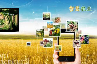 智慧农业发展的三大方向和模式