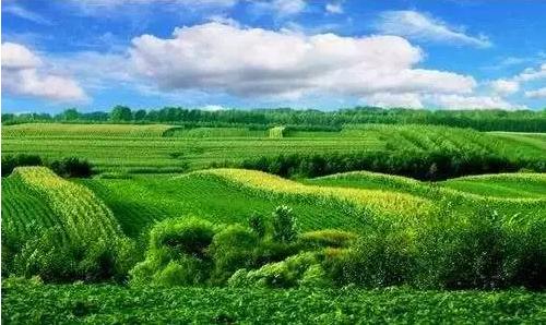 台湾精细农业启示录:我们落后的不仅仅是思维