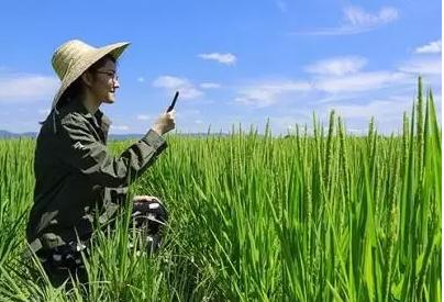 重磅|8大农业结构调整重点支持领域:补贴多、力度大