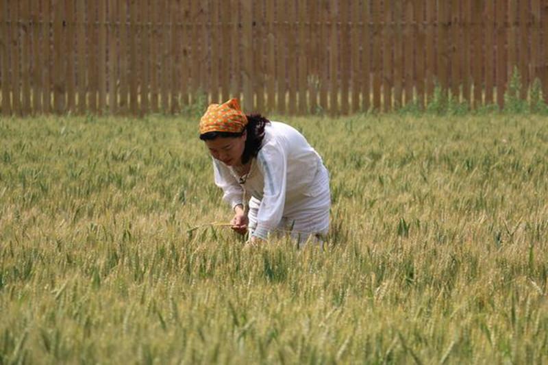 剑桥女博士回京种地,弃百万年薪扛起锄头!互联网+农业到底是什么?