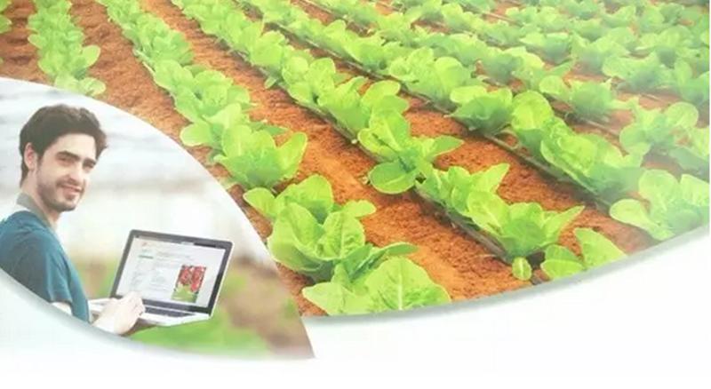 """2017年""""互联网农业""""发展趋势,机会在哪?"""