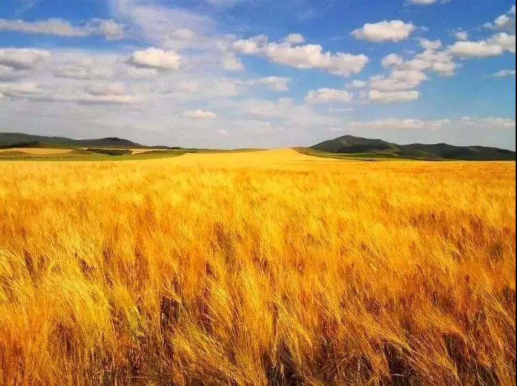 """做农业就是""""围城"""",2018年农业该怎样经营?"""