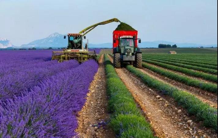 三农日报|草莓空中育苗:产量翻番;沃尔玛发力区块链+农业