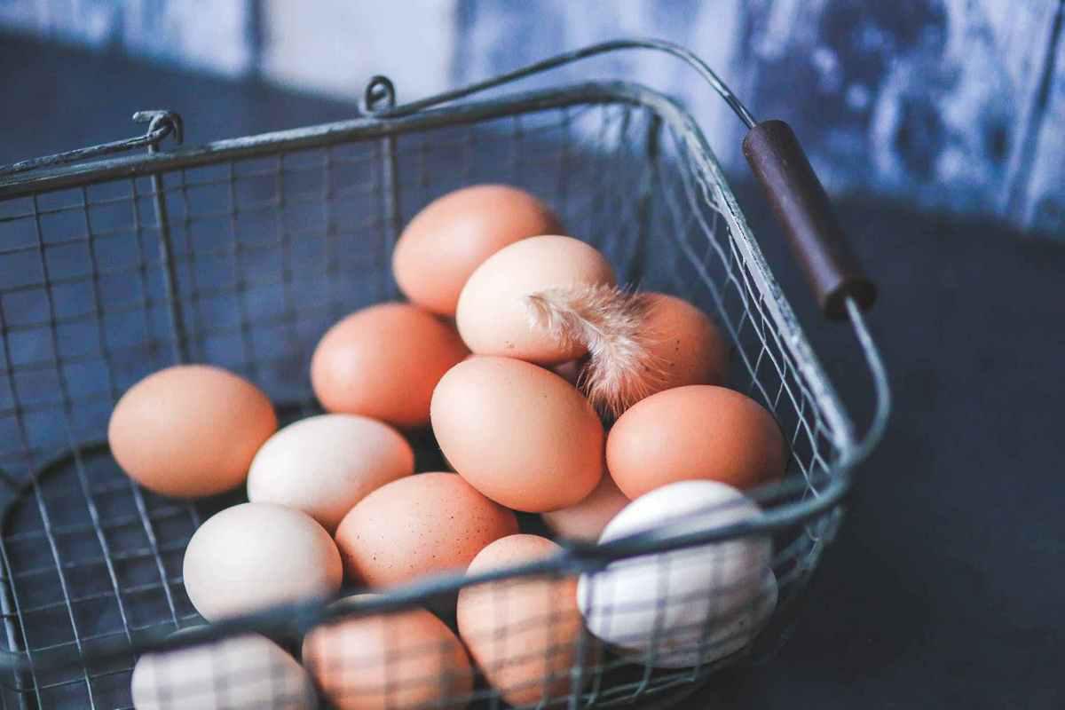 以蛋品供应链整合切入生鲜市场,「龙龙蛋」获星瀚资本天使轮融资