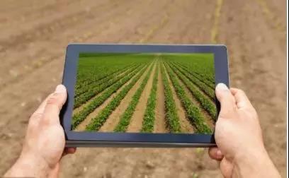 锐观察|中国农业有哪些道路?怎么走?