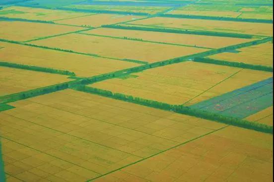 大预测|数字农业,下一个金矿!