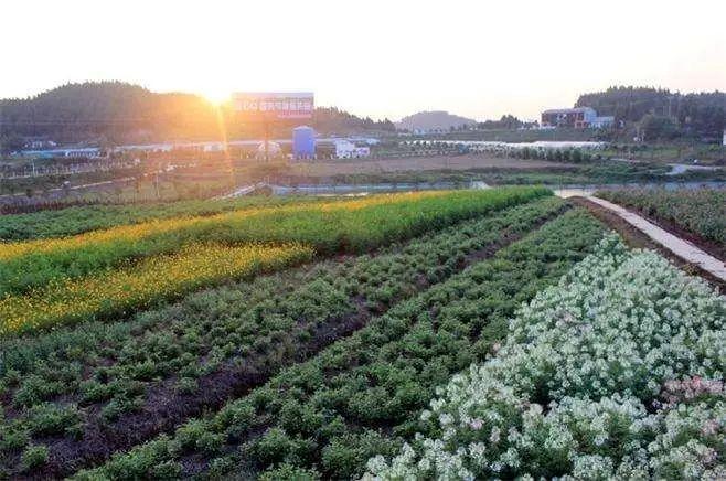 中国农业规模化如何干?3大资源决定成败