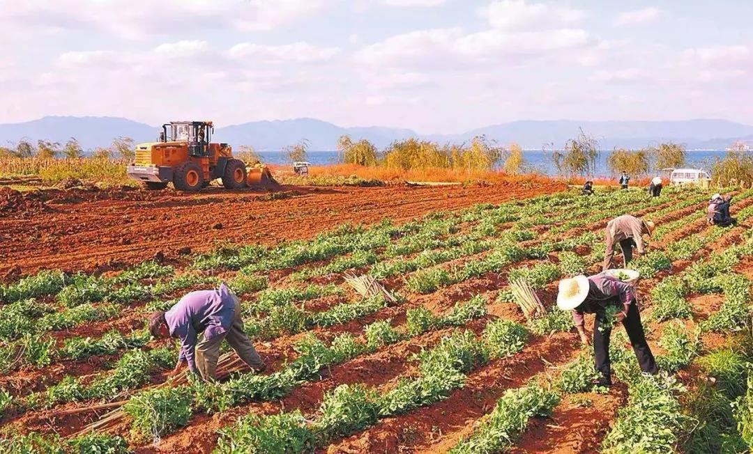 三农日报|国家鼓励发展互联网云农场;农村交易新模式:农产品换购