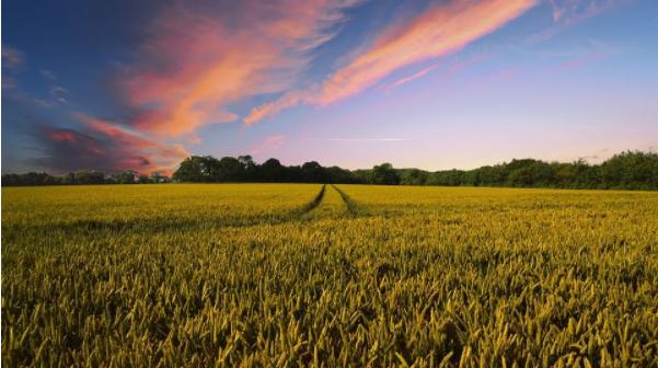 区块链技术用于农业领域,前景是否广阔?