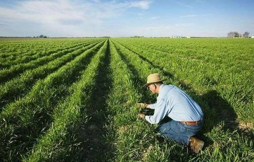 给农作物看病是个好生意!但这个行业没有巨头,需要勇士也需要烈士!