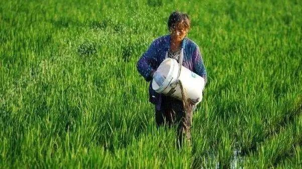 三农日报|专家:未来农业一定是网络化;我国化肥用量是40年前的55倍