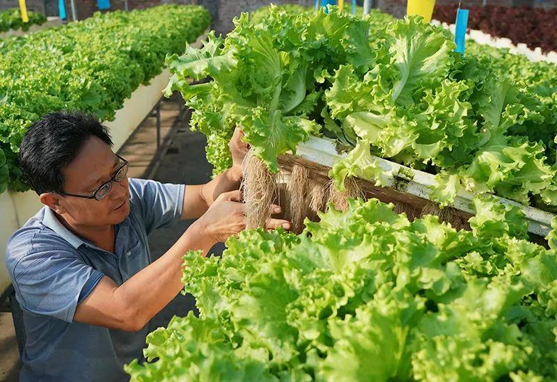 三农日报|我国农业产业联合体发展迅速;数字农业成中国农业新亮点