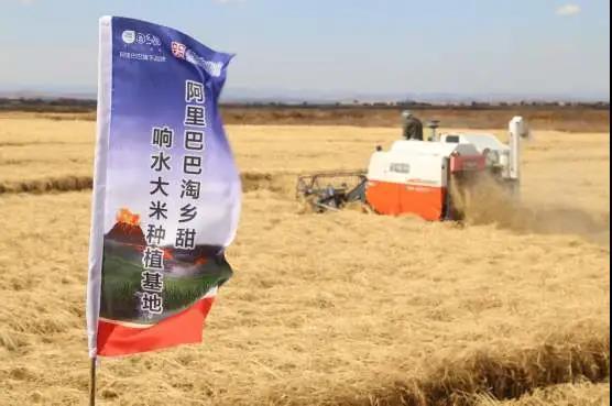 """【新农业】阿里的""""盒马村"""" 背后是中国数字农业的未来"""
