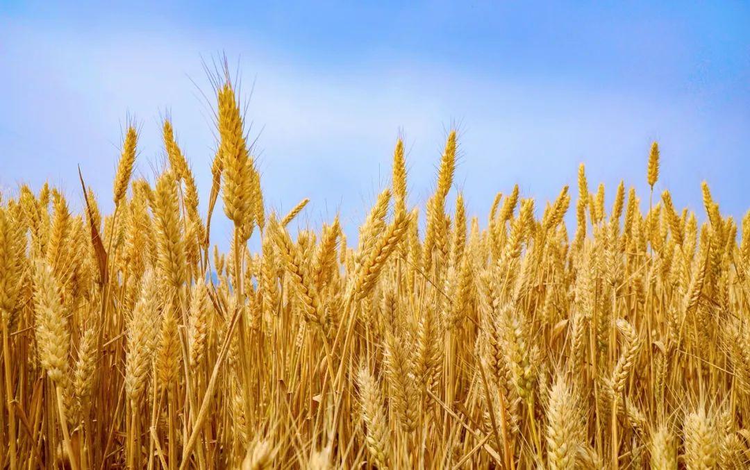 """【案例研究】""""十四五""""农业: 数字化是主流趋势!"""