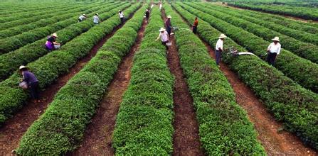 探讨!互联网下,农业产业发展的关键要素有哪些?