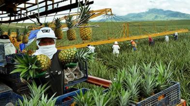 杜非:互联网农业面临的4大难题和4种解决方式