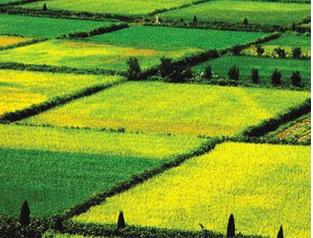 种植发展有机农业的五大难点问题