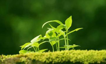 """如何破解有机农业发展""""瓶颈""""?有机农业发展应该如何走?"""