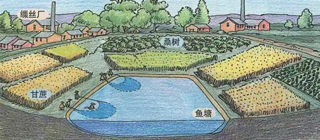 现代农业到底该如何发展?循环农业成了趋势!