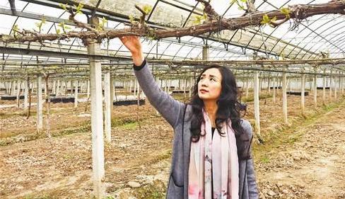 缪敏:拥抱农业产业化机遇 建3000亩生态农场