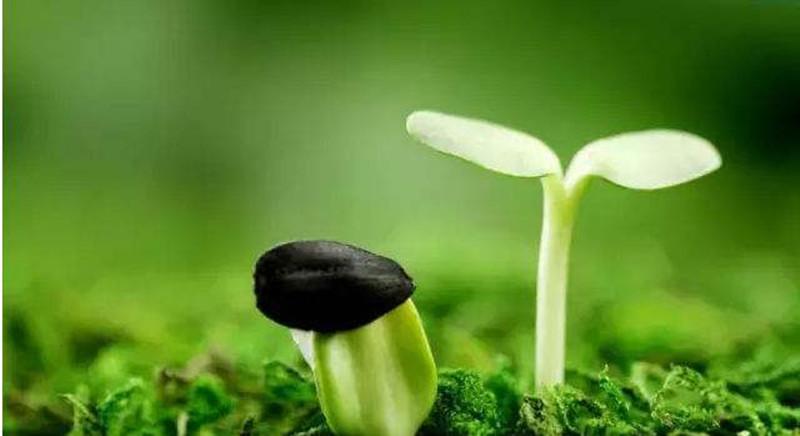 产业分析|未来有机肥市场或超1900亿元,但产业化成救命稻草