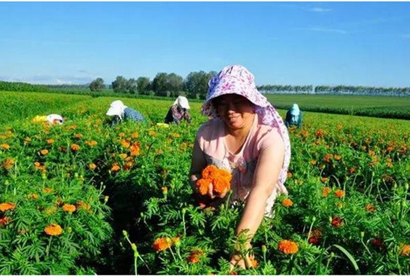 有机农业不减产,实例来证!
