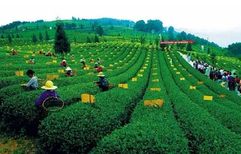 生态农业9大经营模式:赚钱就是这么轻松!
