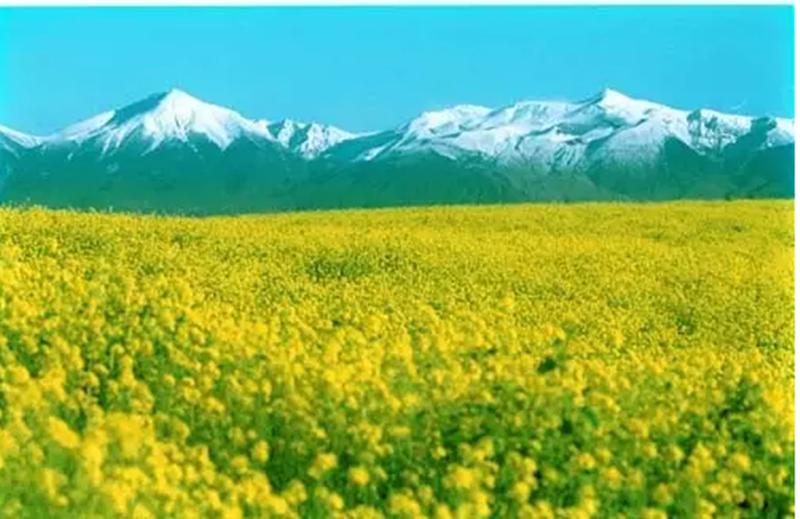 生态循环农业上升为国家战略,300个农业项目,政策、机会看这里!