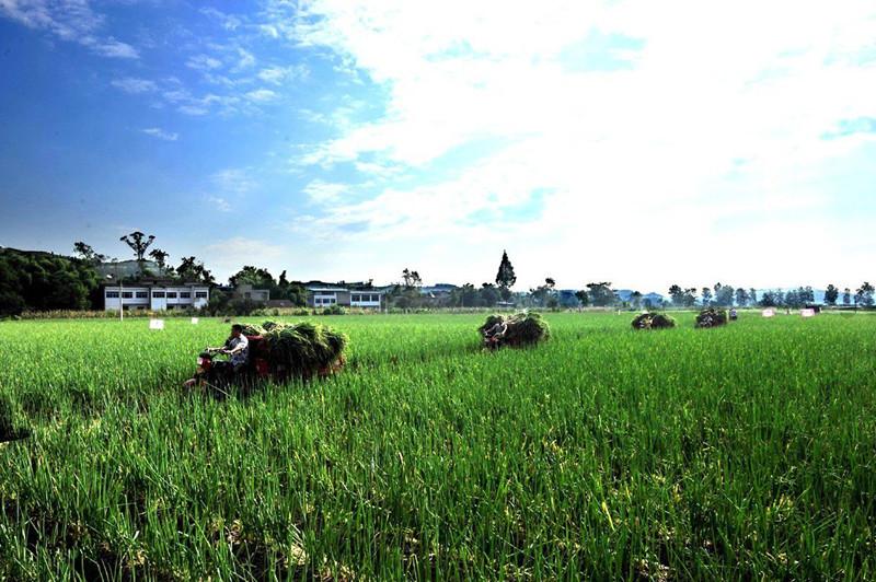 新农人必须知道的未来农业发展趋势!