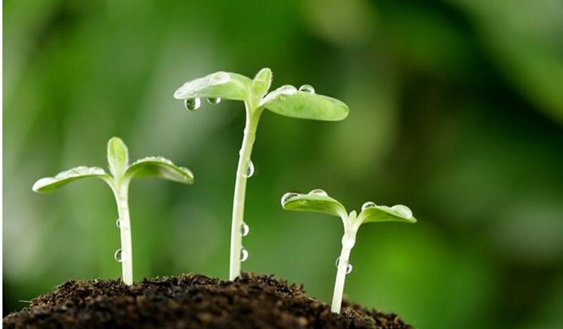 大观察|未来十年,有机农业原来有这么多机会!