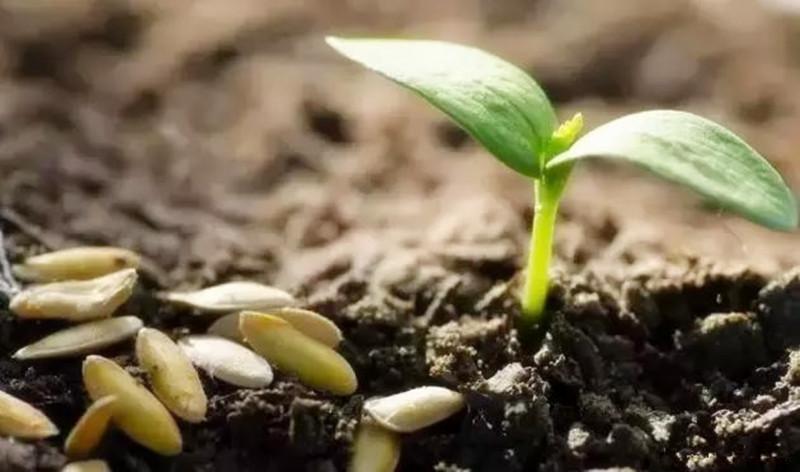 未来10年,有机农业将成为主力军