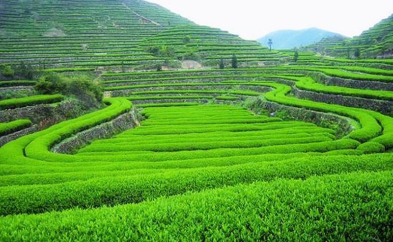 中国农民必需知道这四种依靠市场的农业致富模式,未来还有第五种