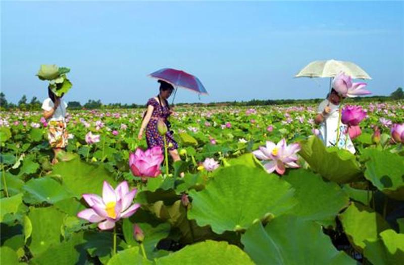 分析 | 我国有机农产品市场发展现状及前景预测