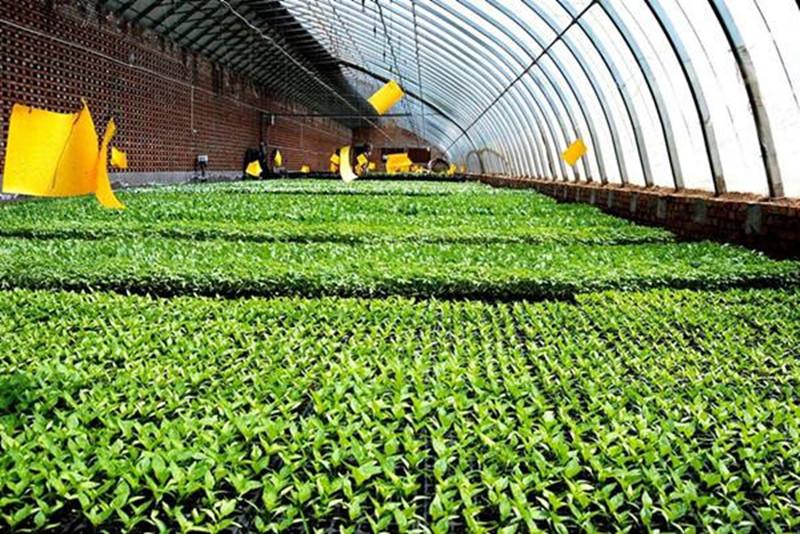 揭秘:我国与外国农业产业链的差异,怎样才能赶追?