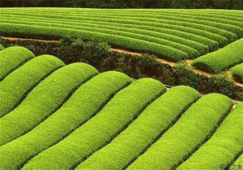 生态有机农业似镜中花,水中月,如何才能成为农民致富好门路?
