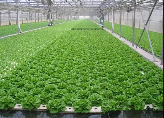 做有机农业,你该了解有机生态型无土栽培技术